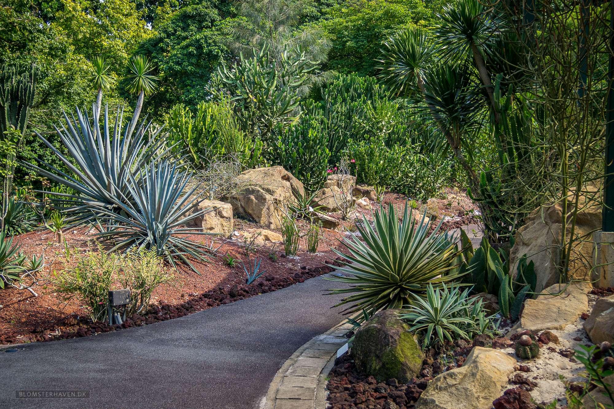 Dry Garden i Singapore Botanic Gardens