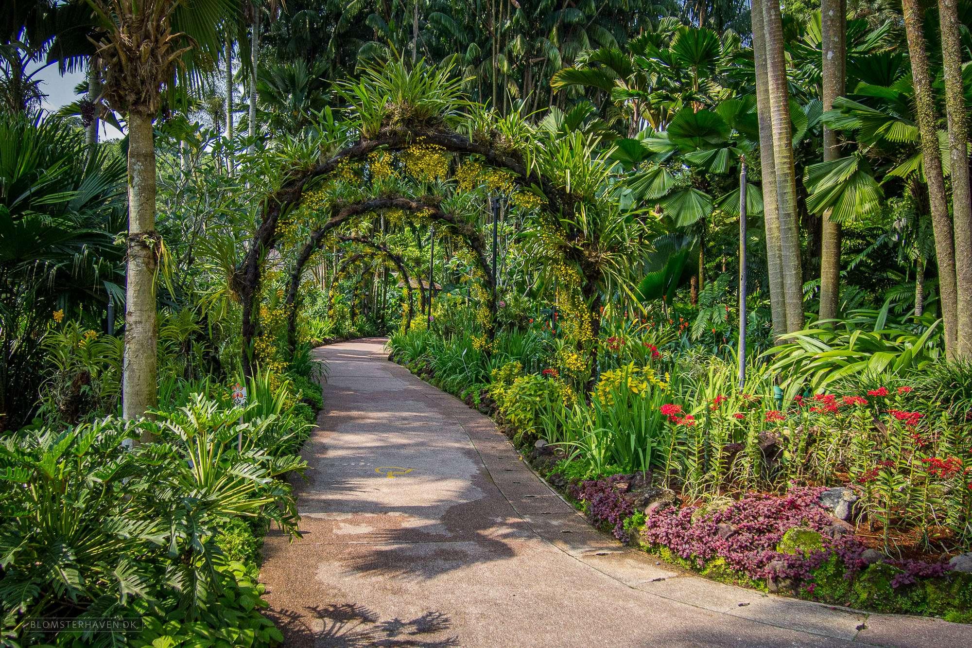 Pergola på en af de mange gode stier i Singapore Botanic Gardens