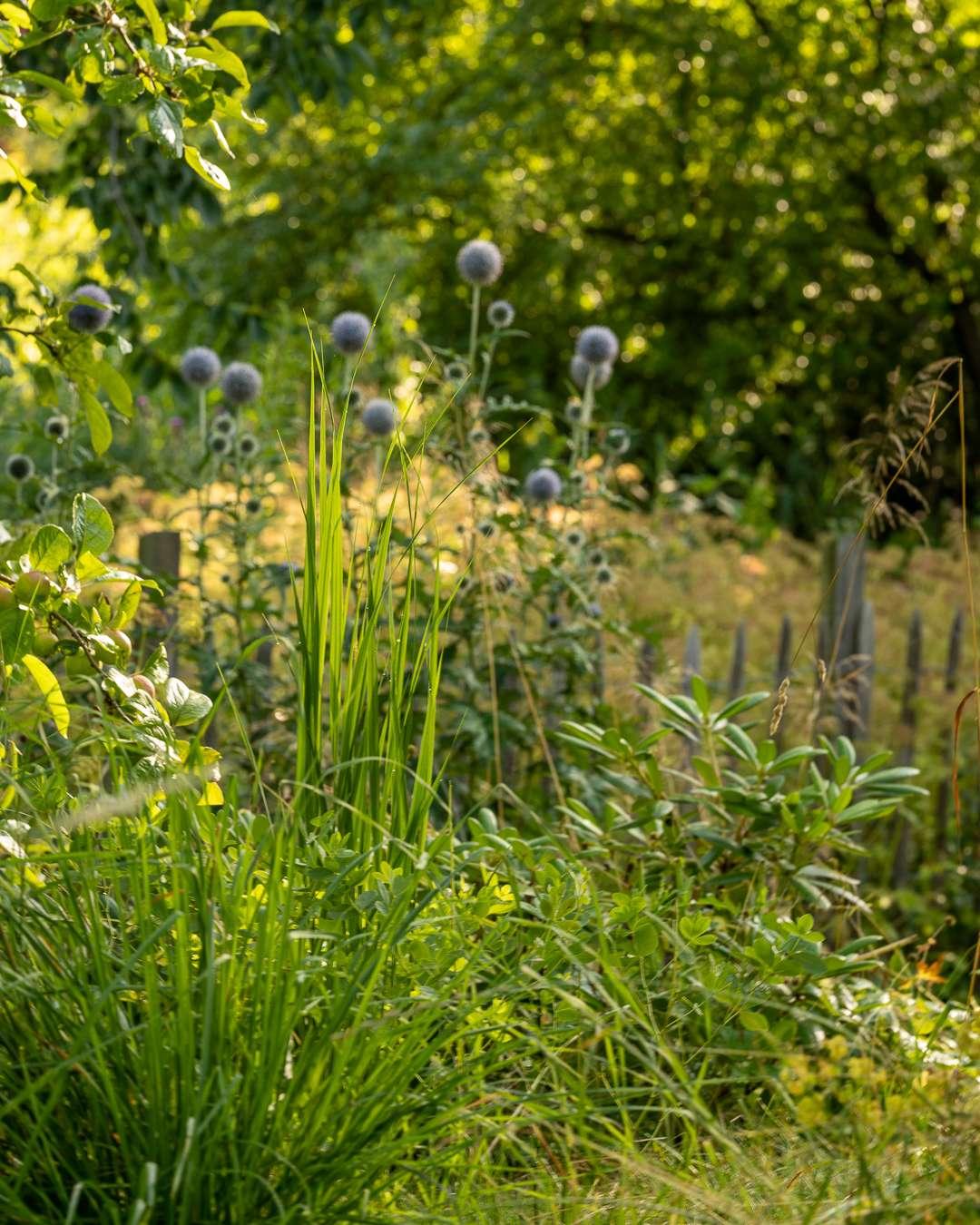 En del af den vilde have, er fyldt med naturligt forekommende vækster