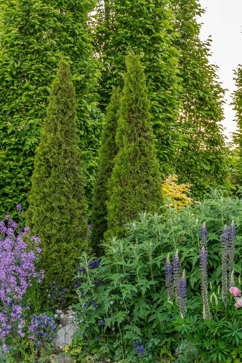 Stedsegrønne vækster i podcast'en Kærlighed til haven