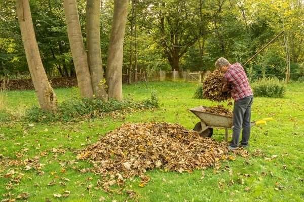 Blade opsamles fra græsplænen i efteråret