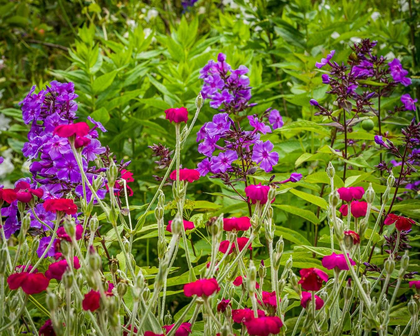 Dristige farver giver kulør og humør til haven