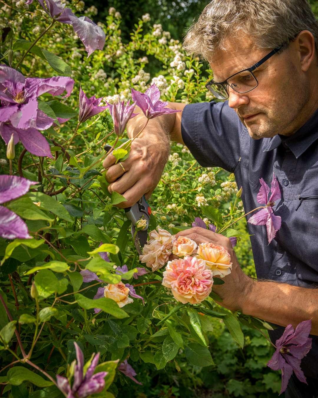 havejournalist Kenn Römer-Bruhn beskærer roser