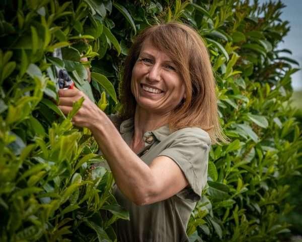 havearkitekt Jeanette Thysen beskærer en laurbærkirsebær