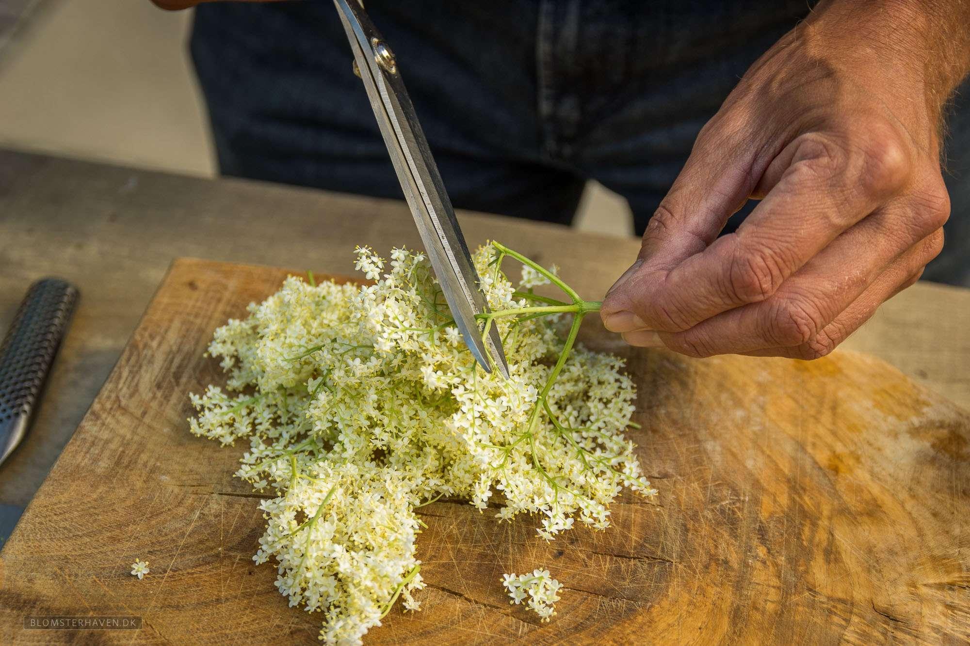 hyldeblomstskærmene klippes ud i mindre bidder til hjemmelavet hyldeblomst champagne