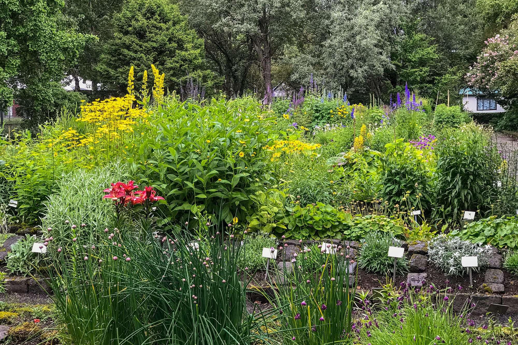 forskellige planter og blomster i reykjavik botaniske haveykjavik botaniske have