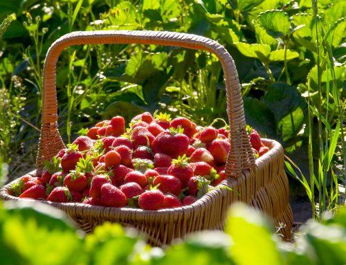 Din spiselige have i juni