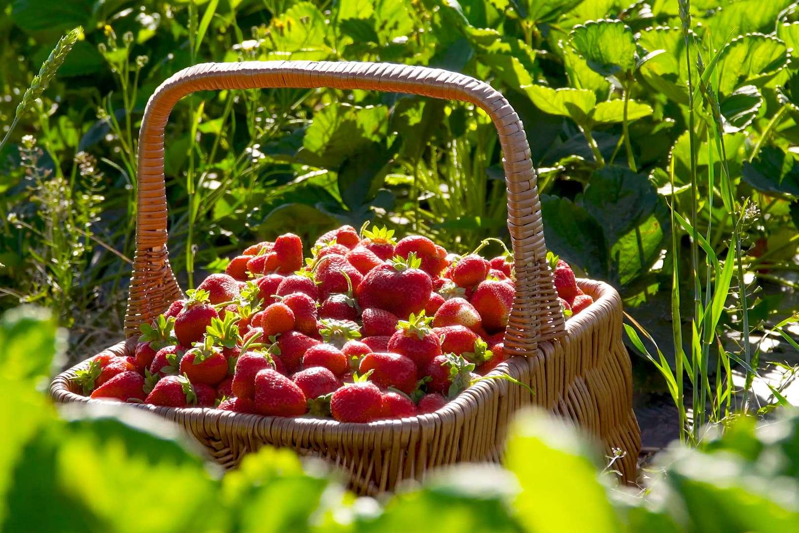 Jordbær fra episoden Din spiselige have i juni