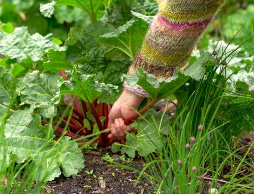 Din spiselige have i maj
